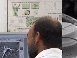 scanning electron microscope SEM FIB